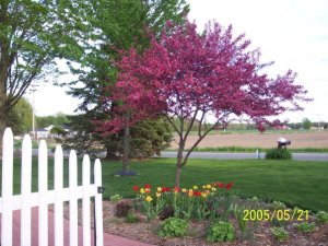 prettytree